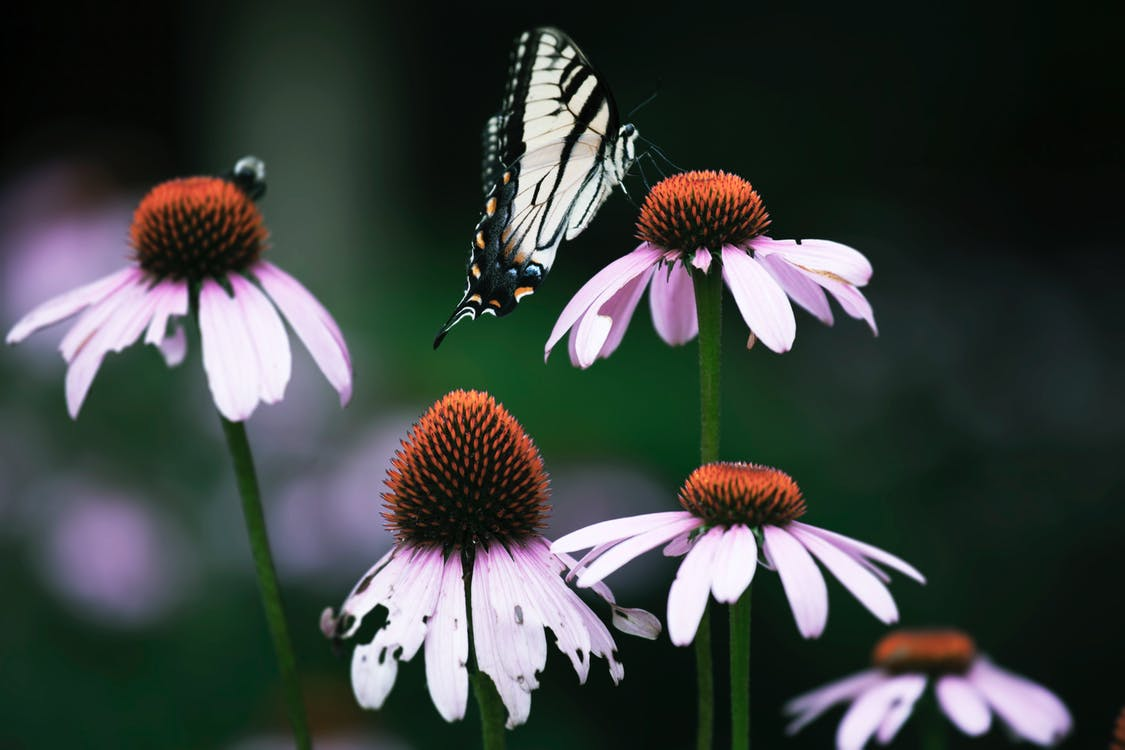 Close-Up Photo of Butterfly Perched On Flower