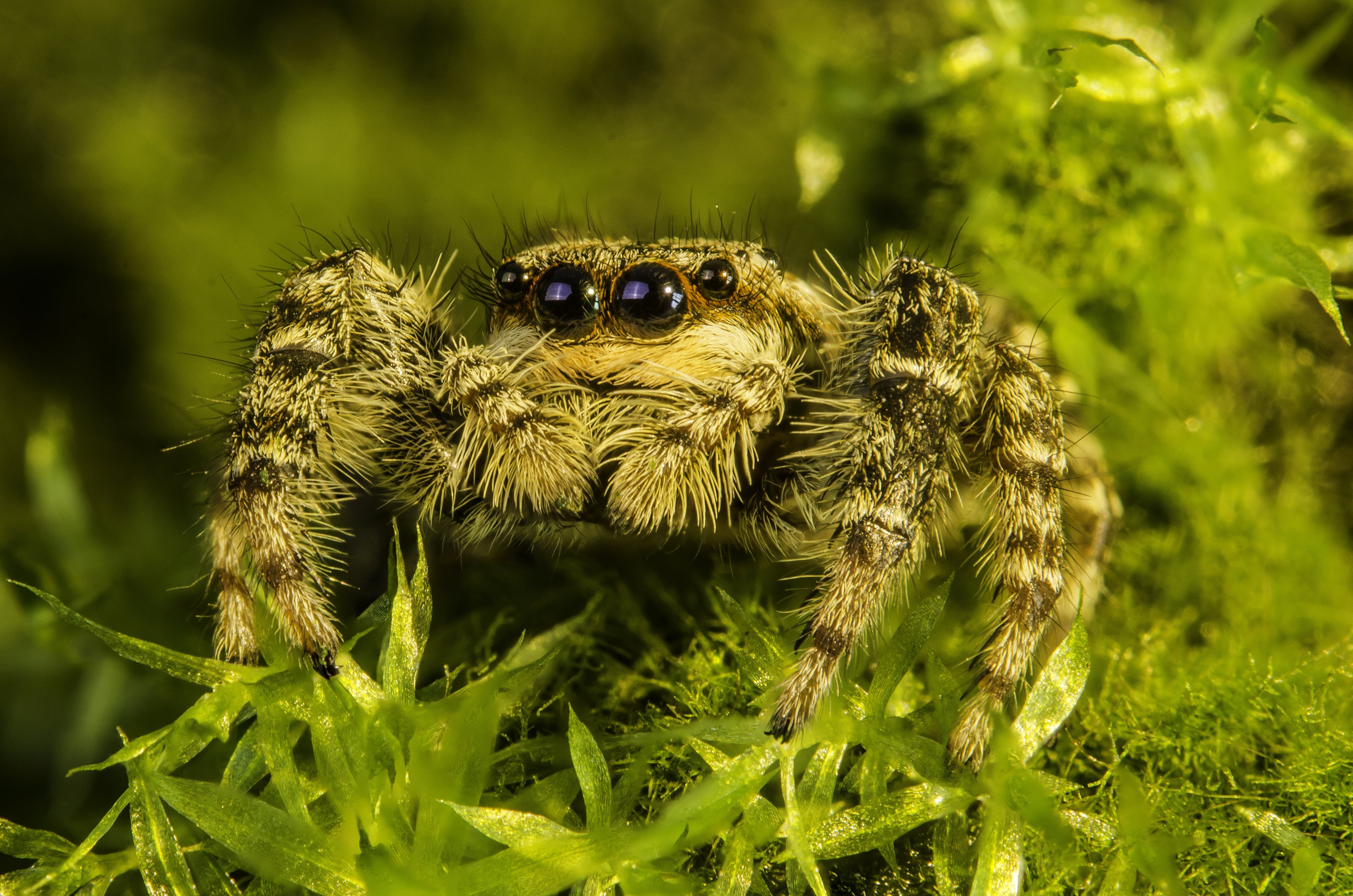 Closeup Photography of Brown and Grey Spider
