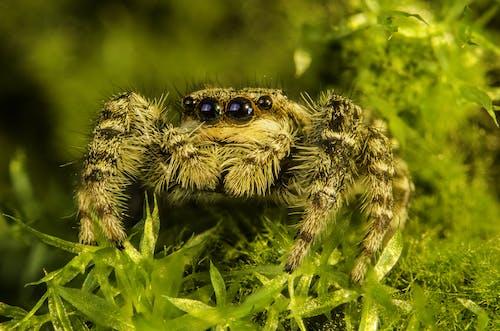 Gratis lagerfoto af close-up, dyr, dyreliv, edderkop