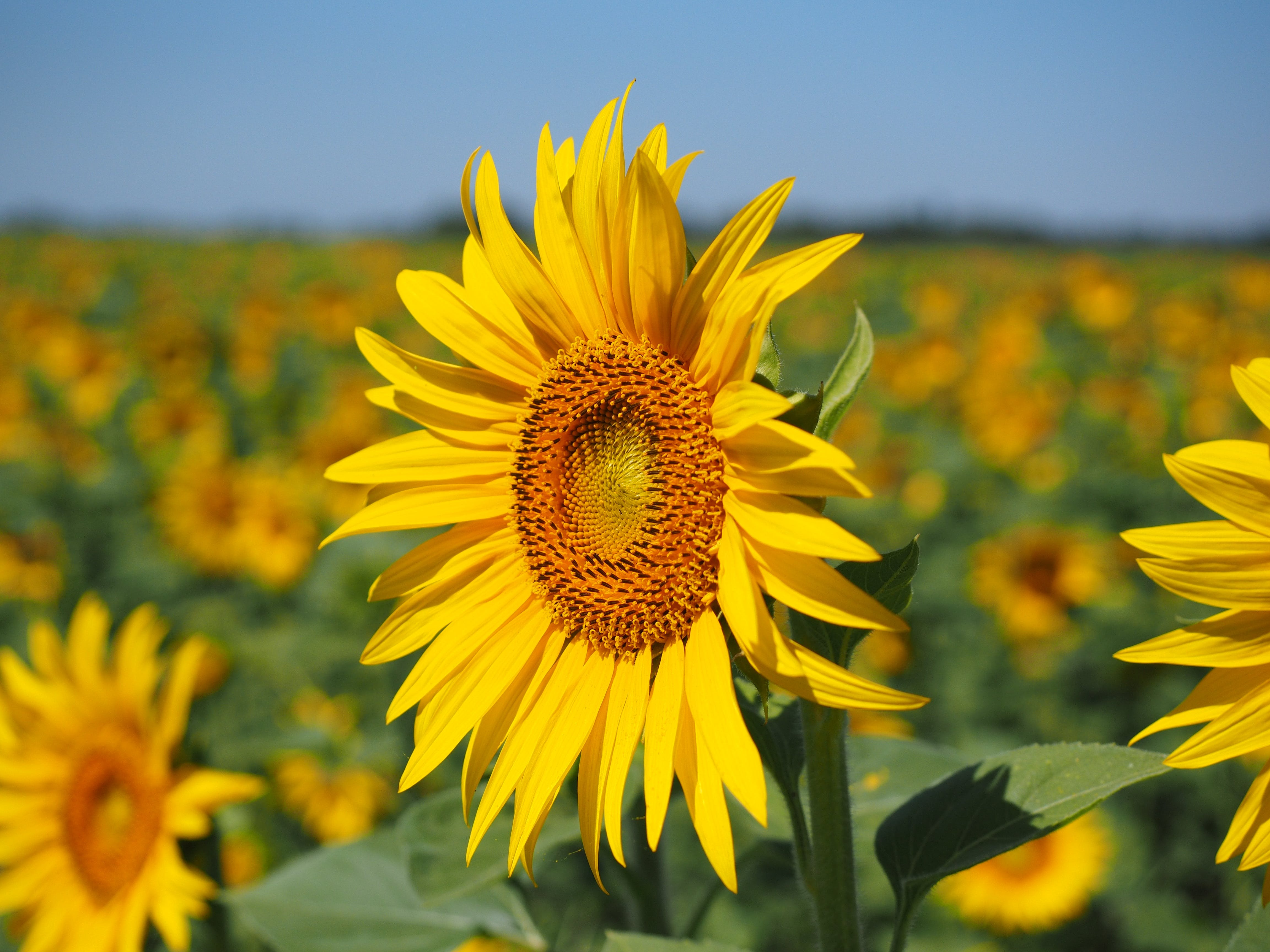 Free stock photo of nature, sunny, yellow, plant