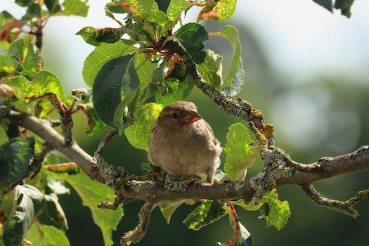 Brown Bird on Tree Branch during Daytime