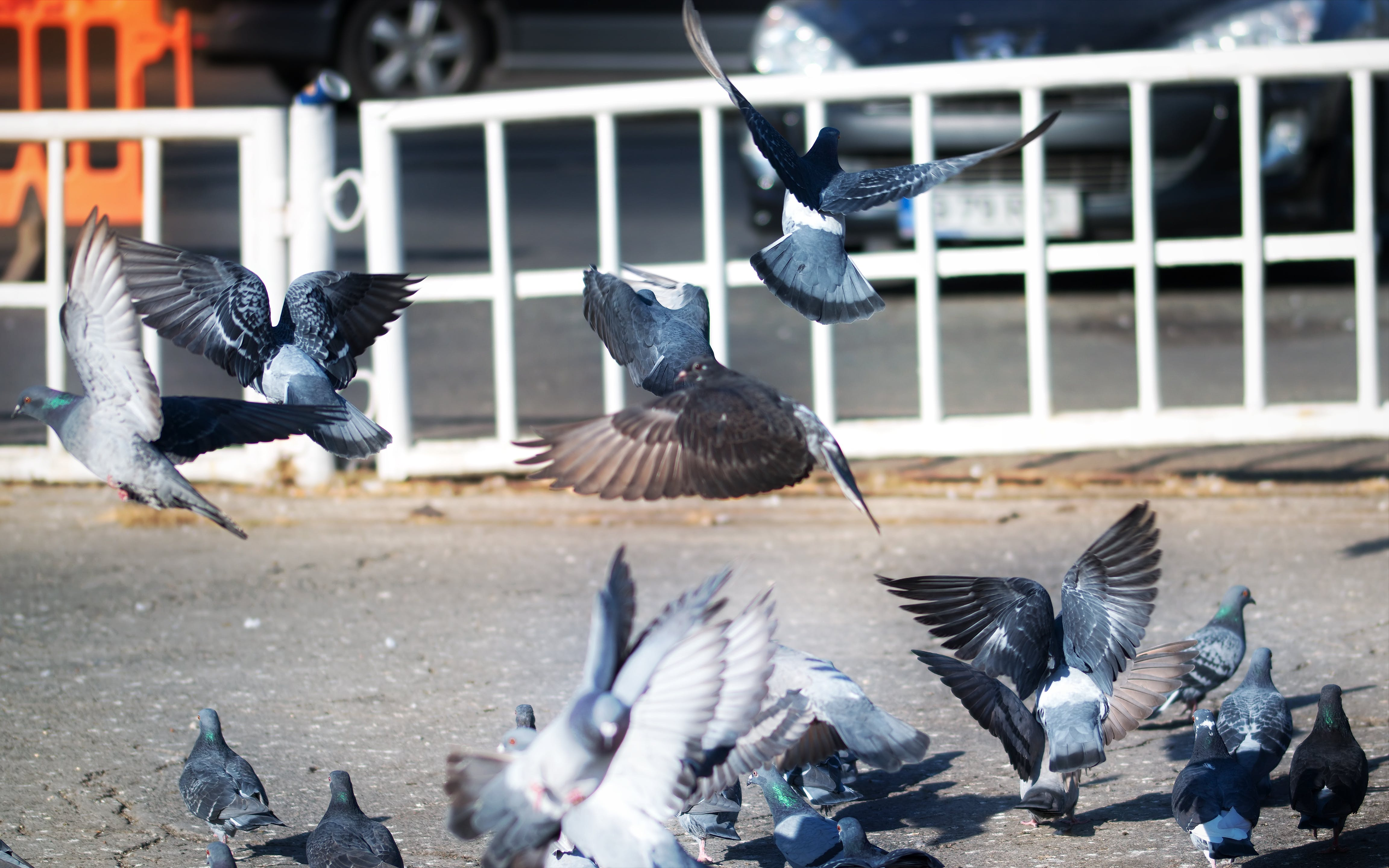 Free stock photo of doves, flying, pigeons, sitting