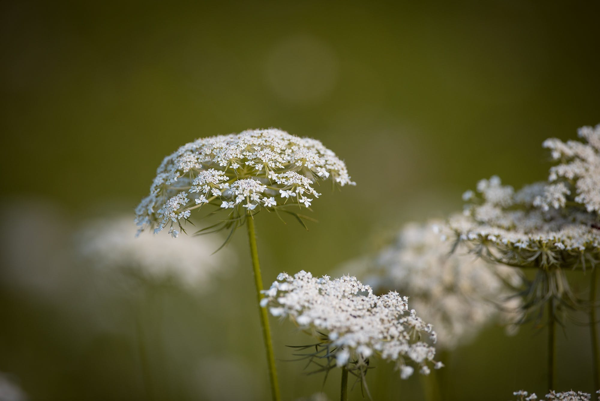 Free stock photo of nature, summer, meadow, plant