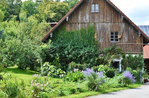 Kostenloses Stock Foto zu bauernhaus, bauernhof, bäume, blumen