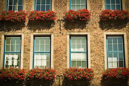 Foto profissional grátis de arquitetura, construção, flores, janelas