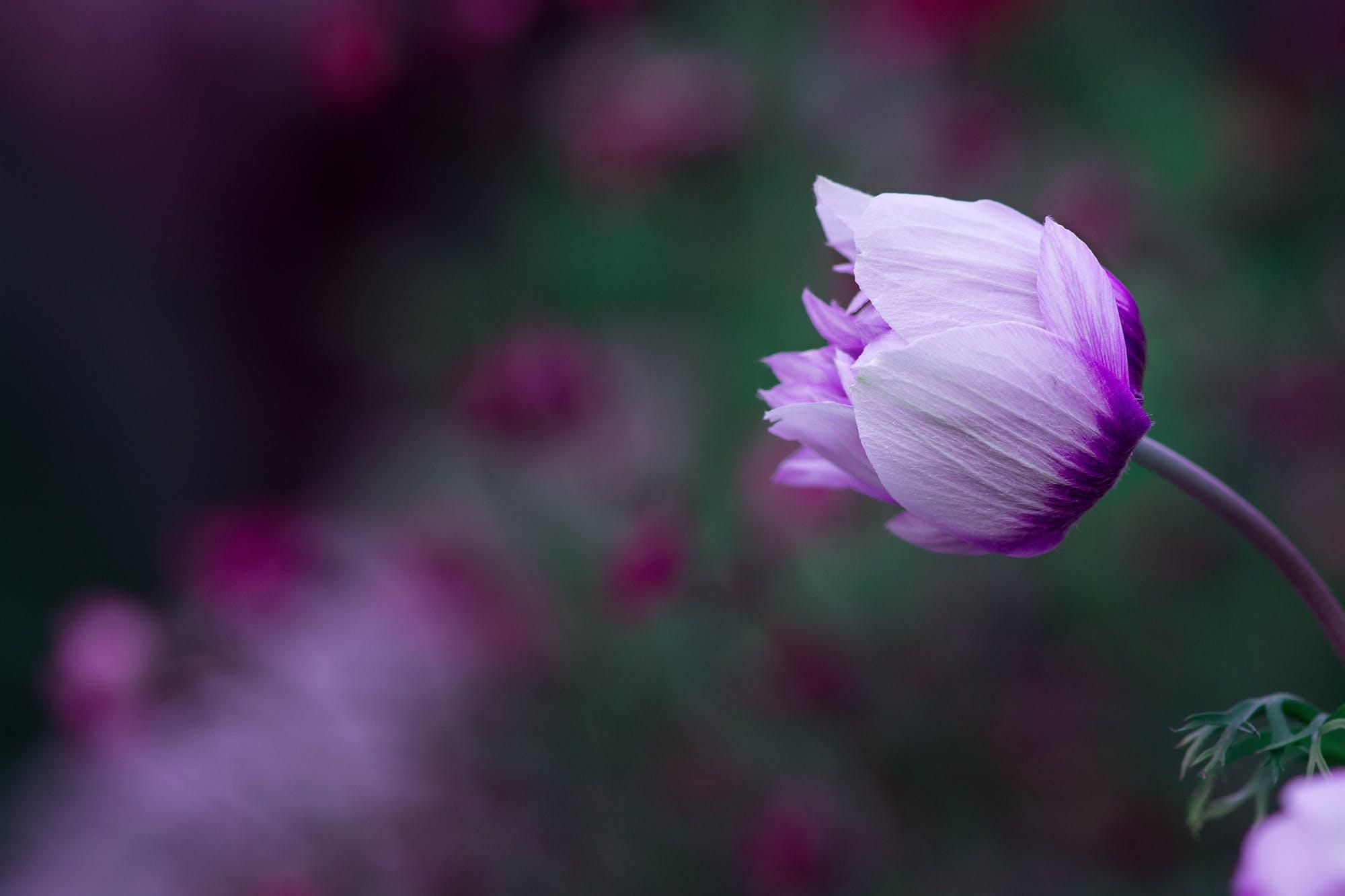 Purple Flower Macro Photography