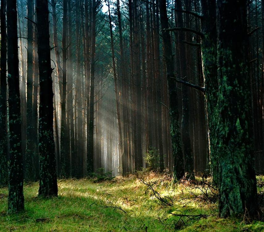 alberi, boschi, erba