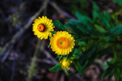 çiçek, doğa, sarı içeren Ücretsiz stok fotoğraf