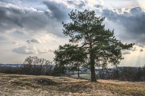 Darmowe zdjęcie z galerii z chmury, drzewa, krajobraz, malowniczy