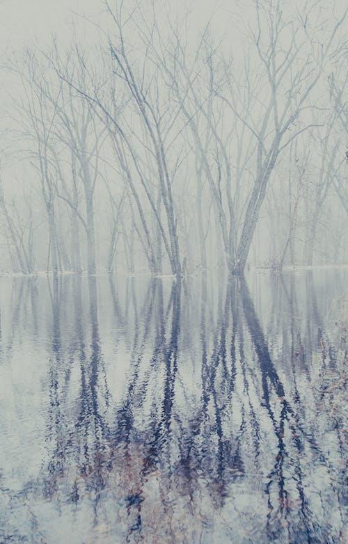 Immagine gratuita di inverno, natale, neve