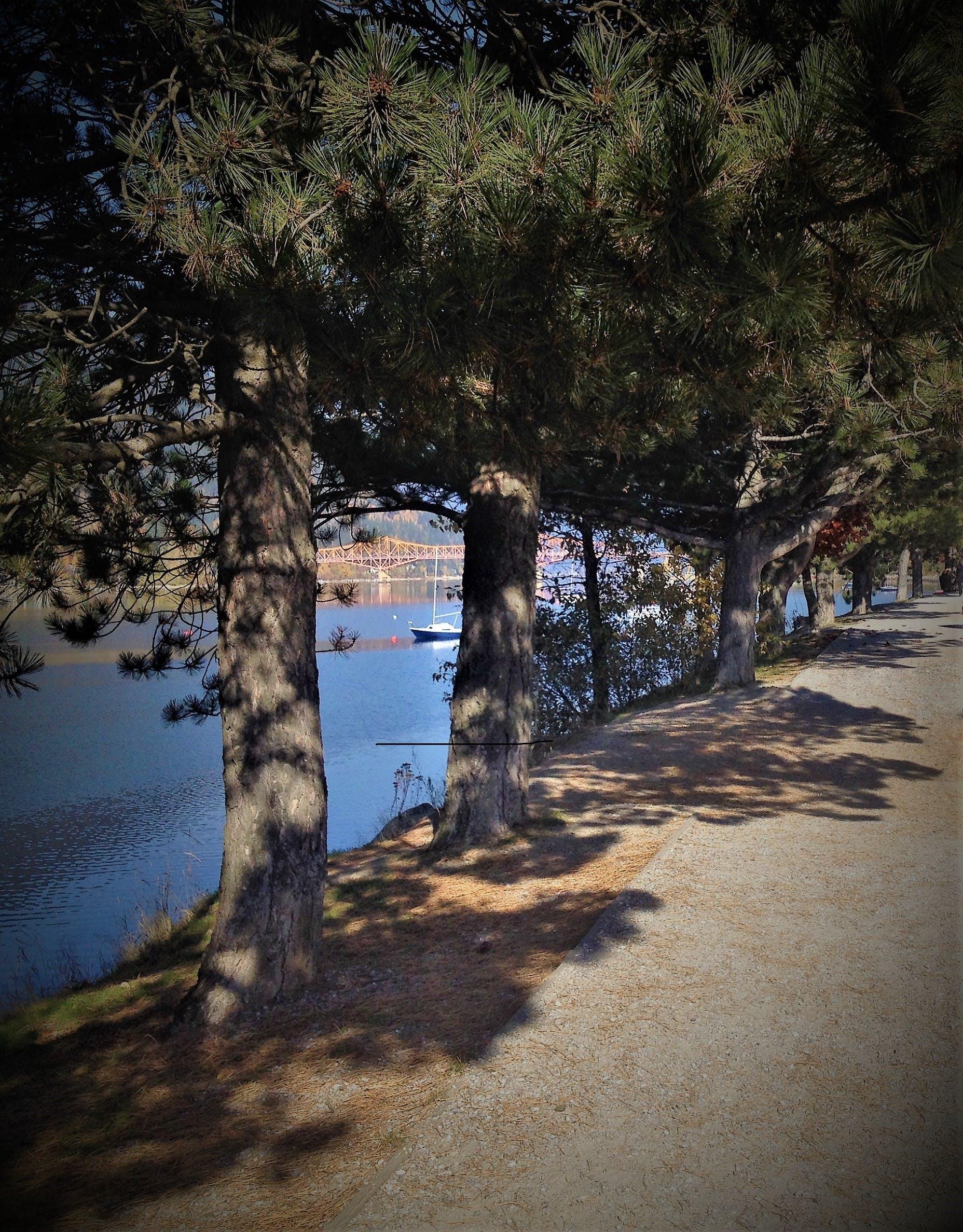 Free stock photo of Kootenay Lake, Nelson Bridge, pine trees, sailboat