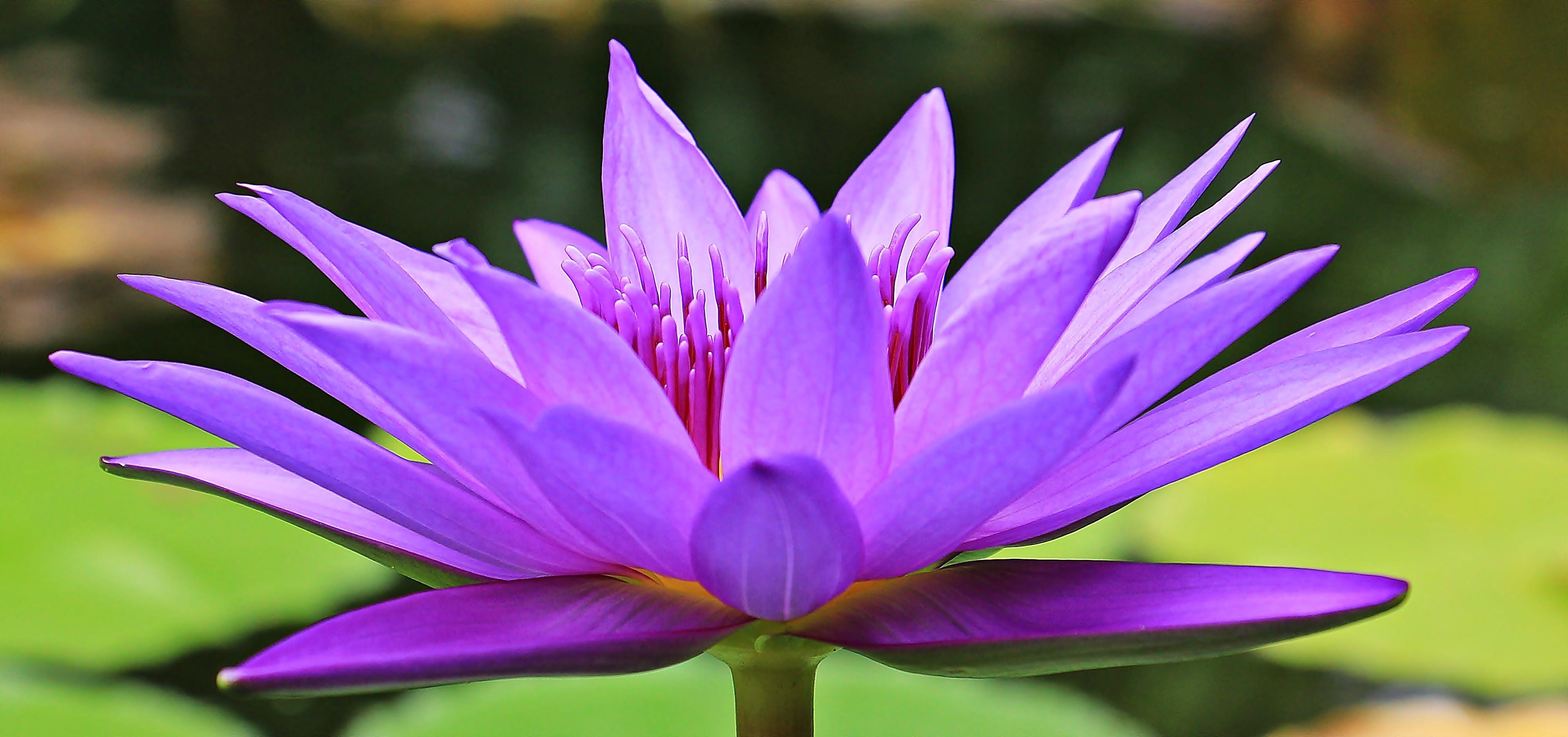 barva, fialová, flóra