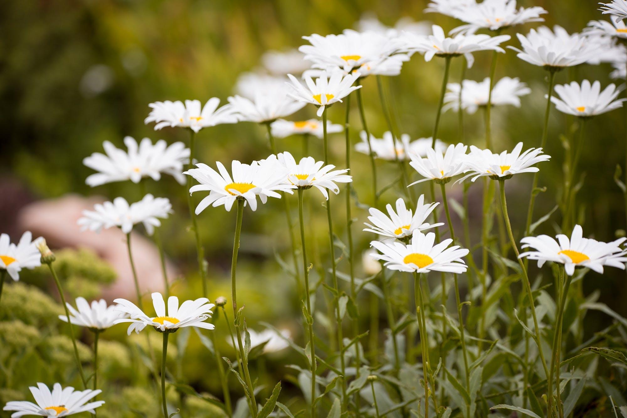 Close Up Photo of White Petaled Flower Plant