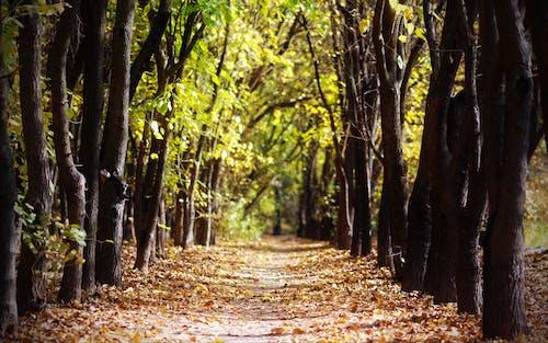 Ilmainen kuvapankkikuva tunnisteilla lehti, pudonneet lehdet, putoaminen, puut