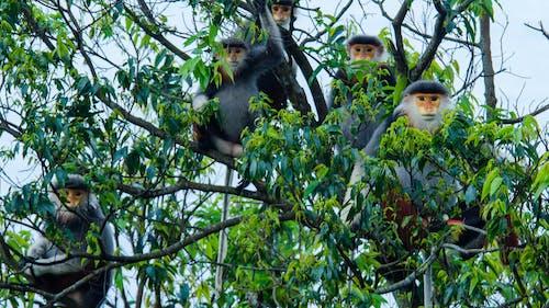 Foto stok gratis khubaoton