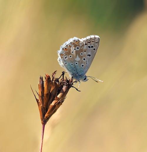 Бесплатное стоковое фото с бабочка, максросъемка, насекомое, флора