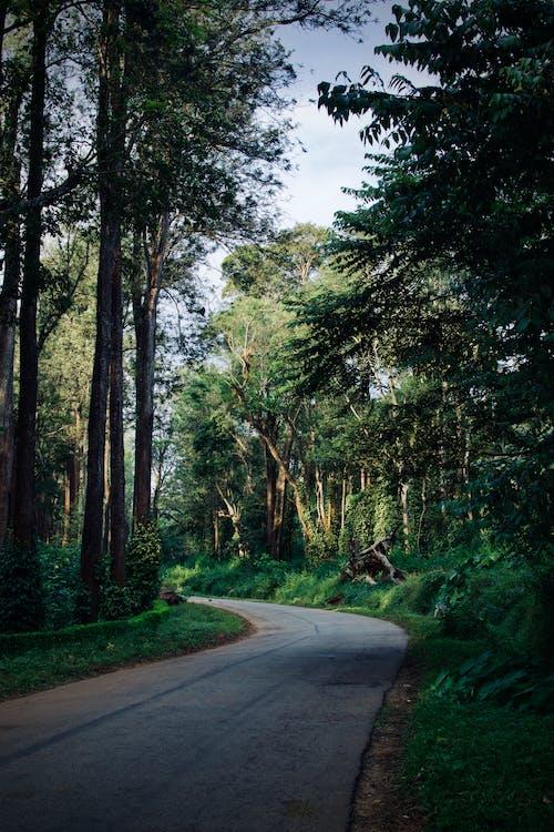 Foto profissional grátis de aconselhamento, árvores, cênico, curva