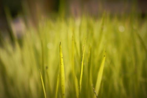 Fotobanka sbezplatnými fotkami na tému čerstvý, detailný záber, ekológia, hracie pole