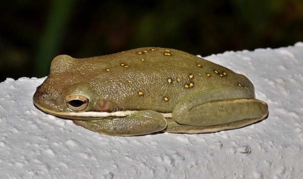 Green Frog on White Surface