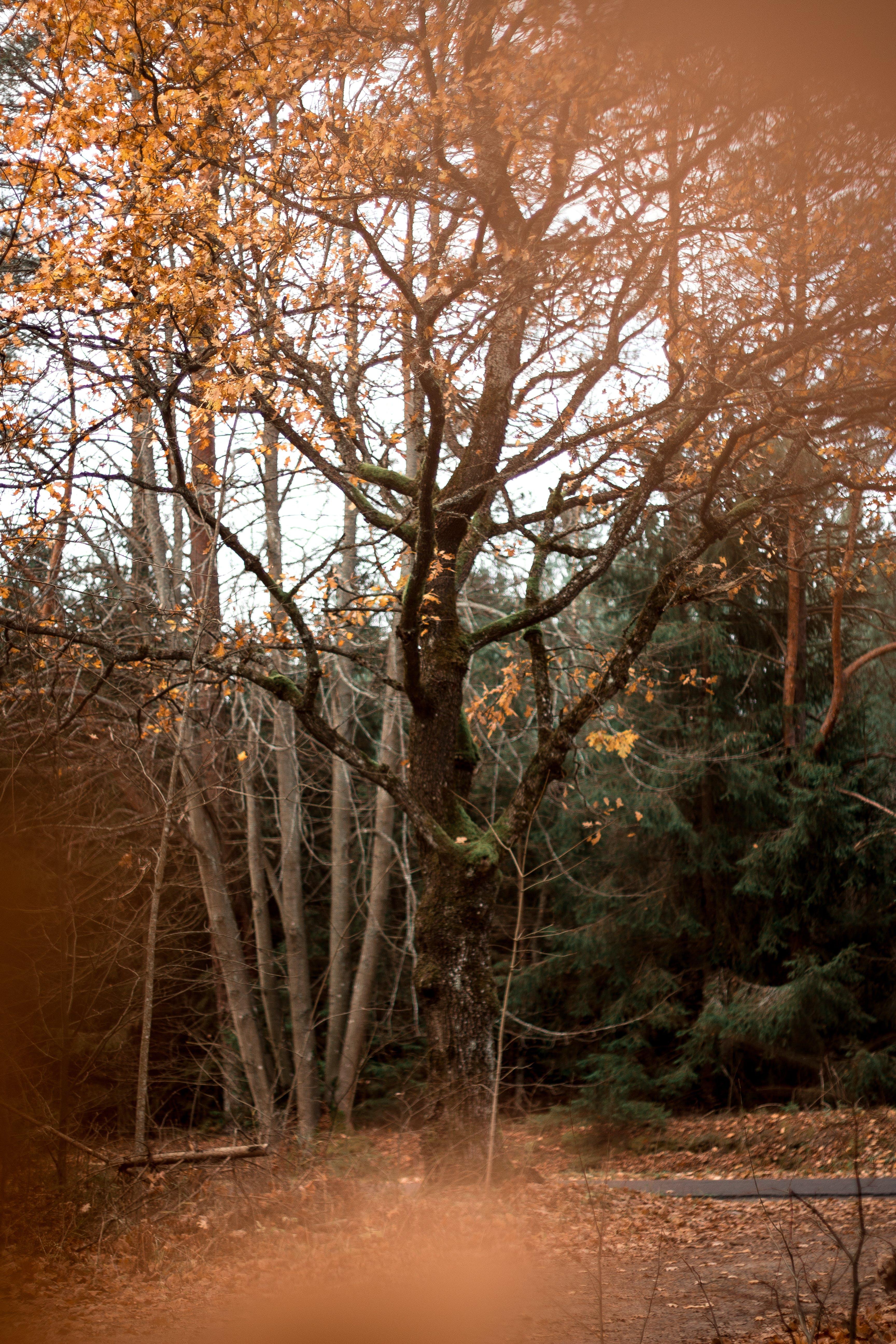 Základová fotografie zdarma na téma divoký, fotka, les, příroda