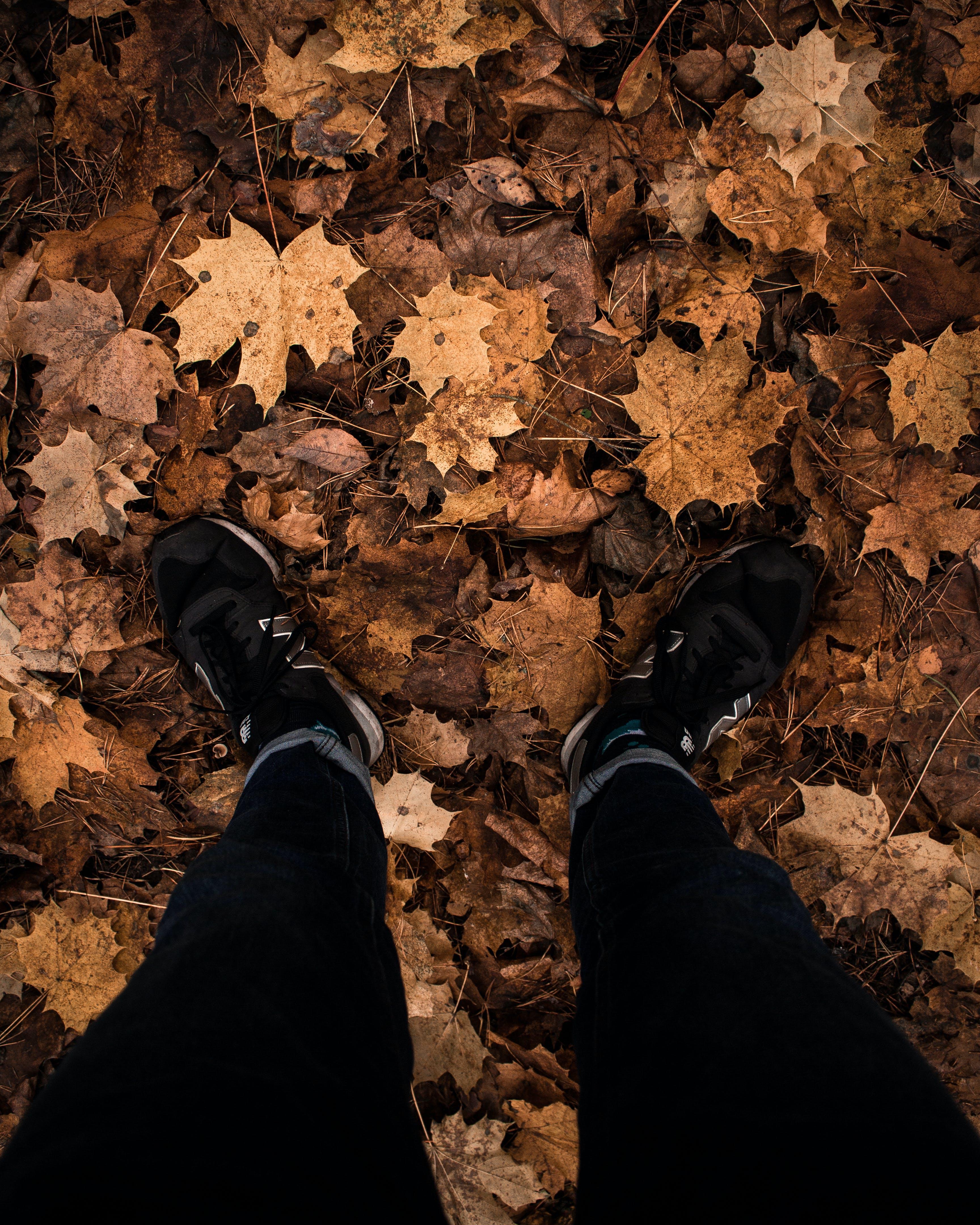 Základová fotografie zdarma na téma divoký, les, newballance, příroda
