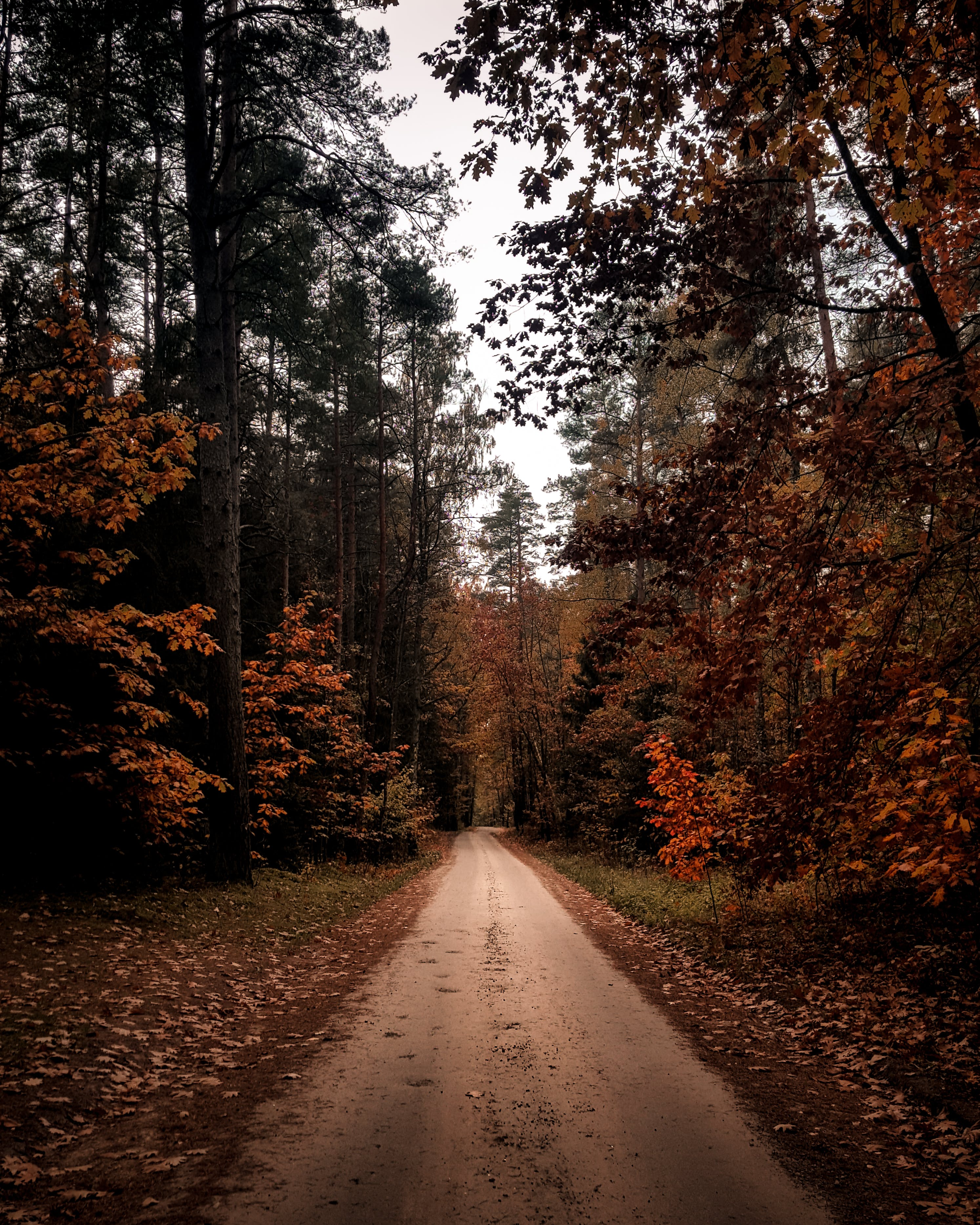 Základová fotografie zdarma na téma divoký, inspirace, les, strom