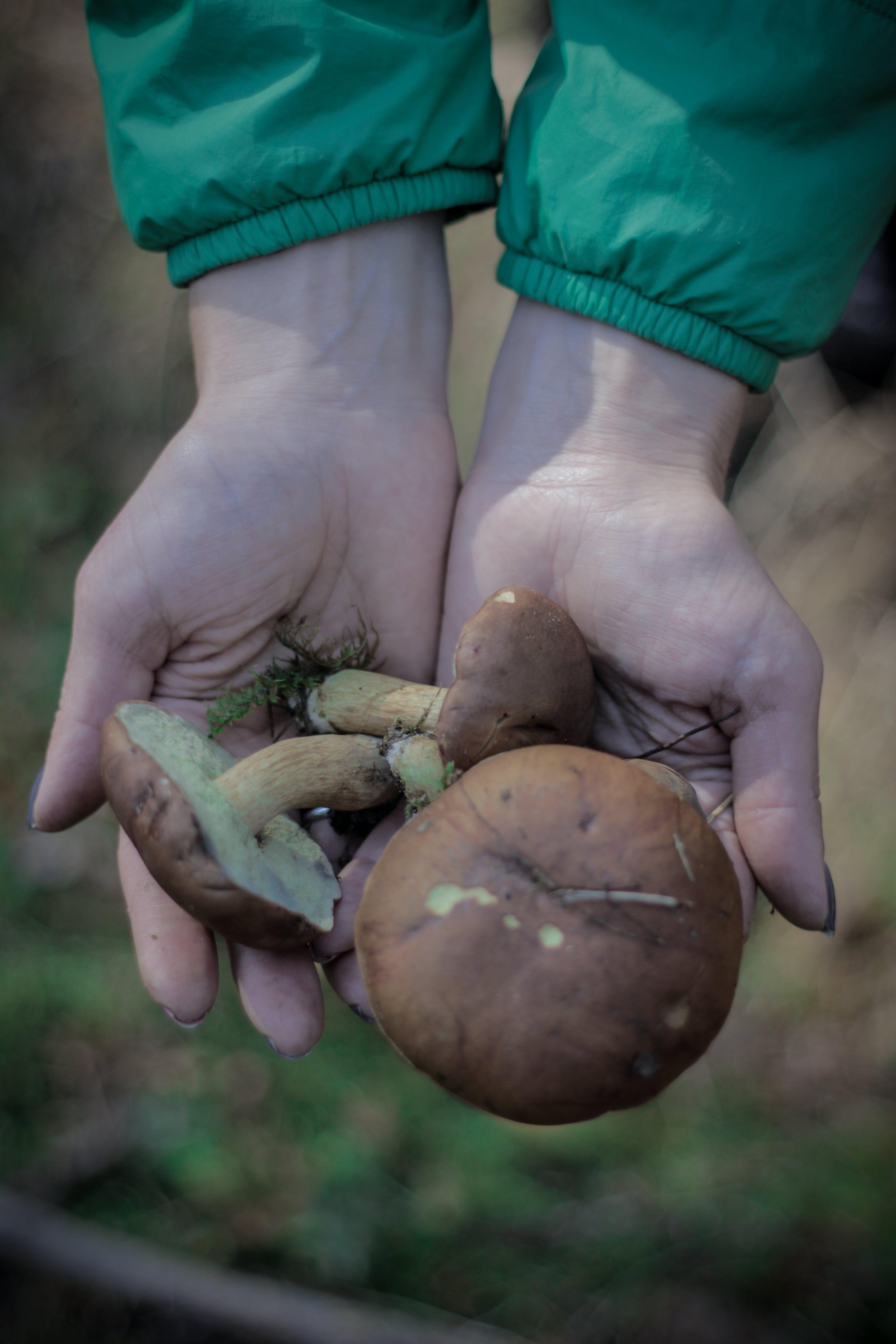 Základová fotografie zdarma na téma divoký, houby, les, ruce