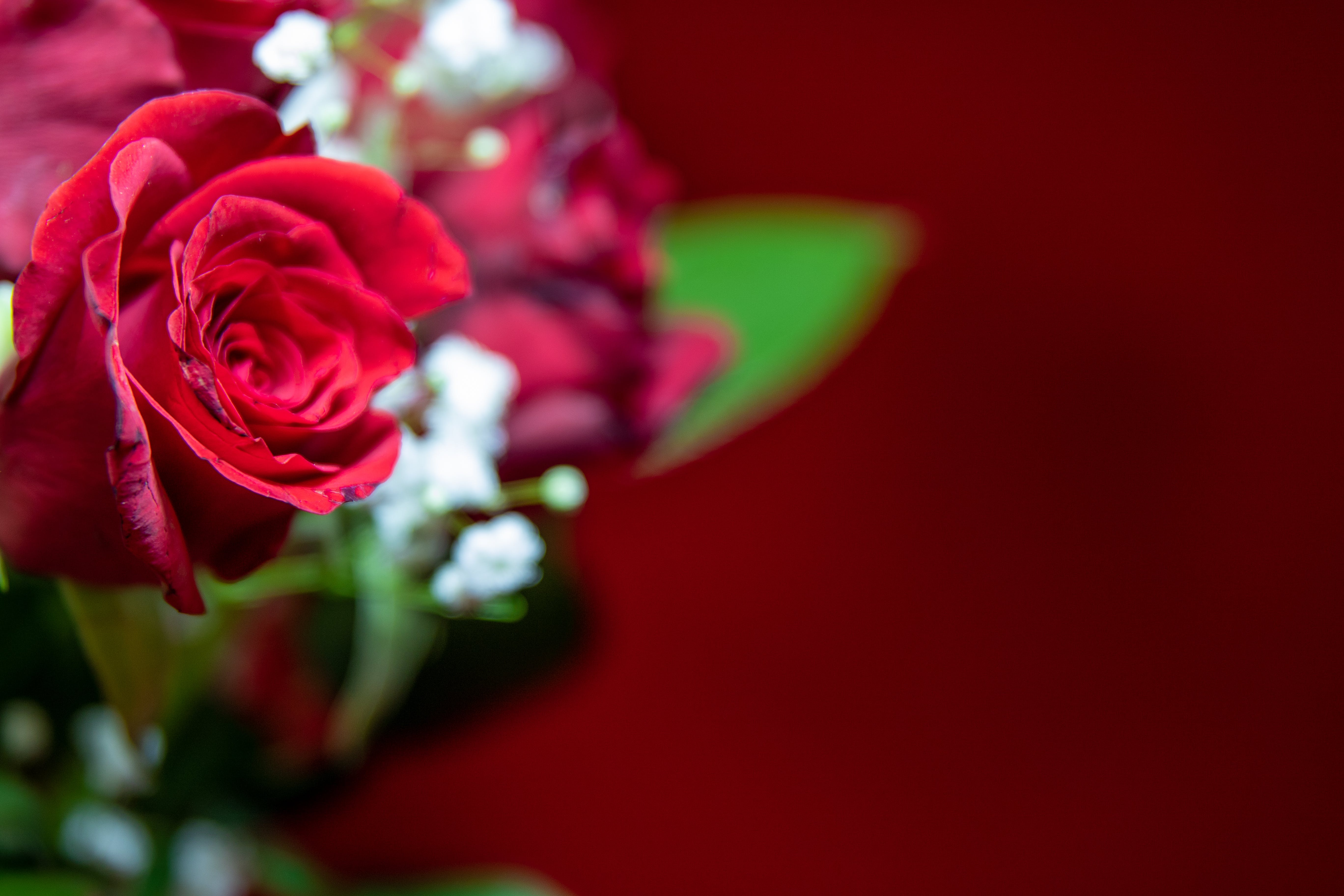 Free stock photo of nature, red, love, flowers