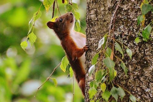動物, 可愛, 囓齒動物, 天性 的 免費圖庫相片