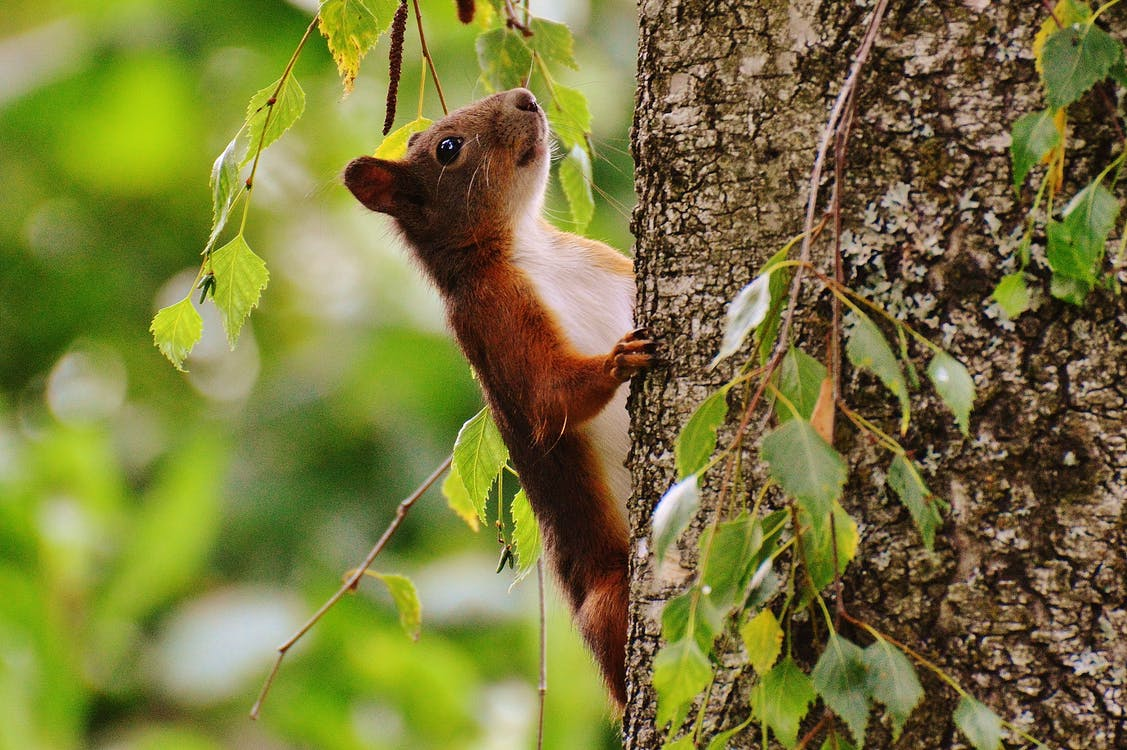 Brown and White Animal on Brown Tree