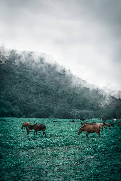 Free stock photo of clouds, forest, horse, jungle