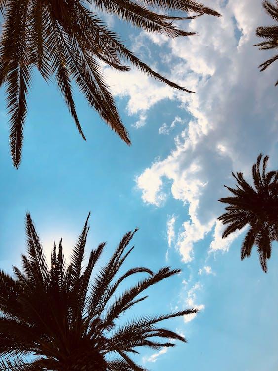 Mavi Gökyüzü Ve Beyaz Bulutlar Altında Yeşil Palmiye Ağacı
