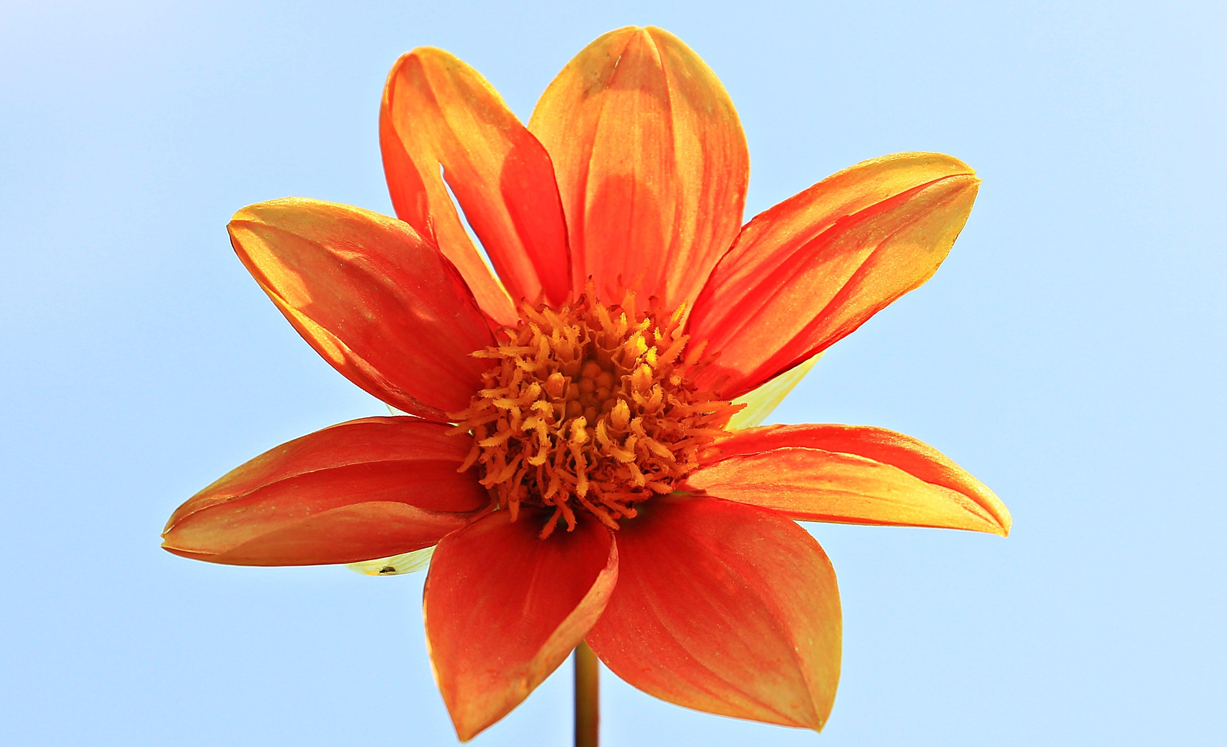 Orange Petal Flower