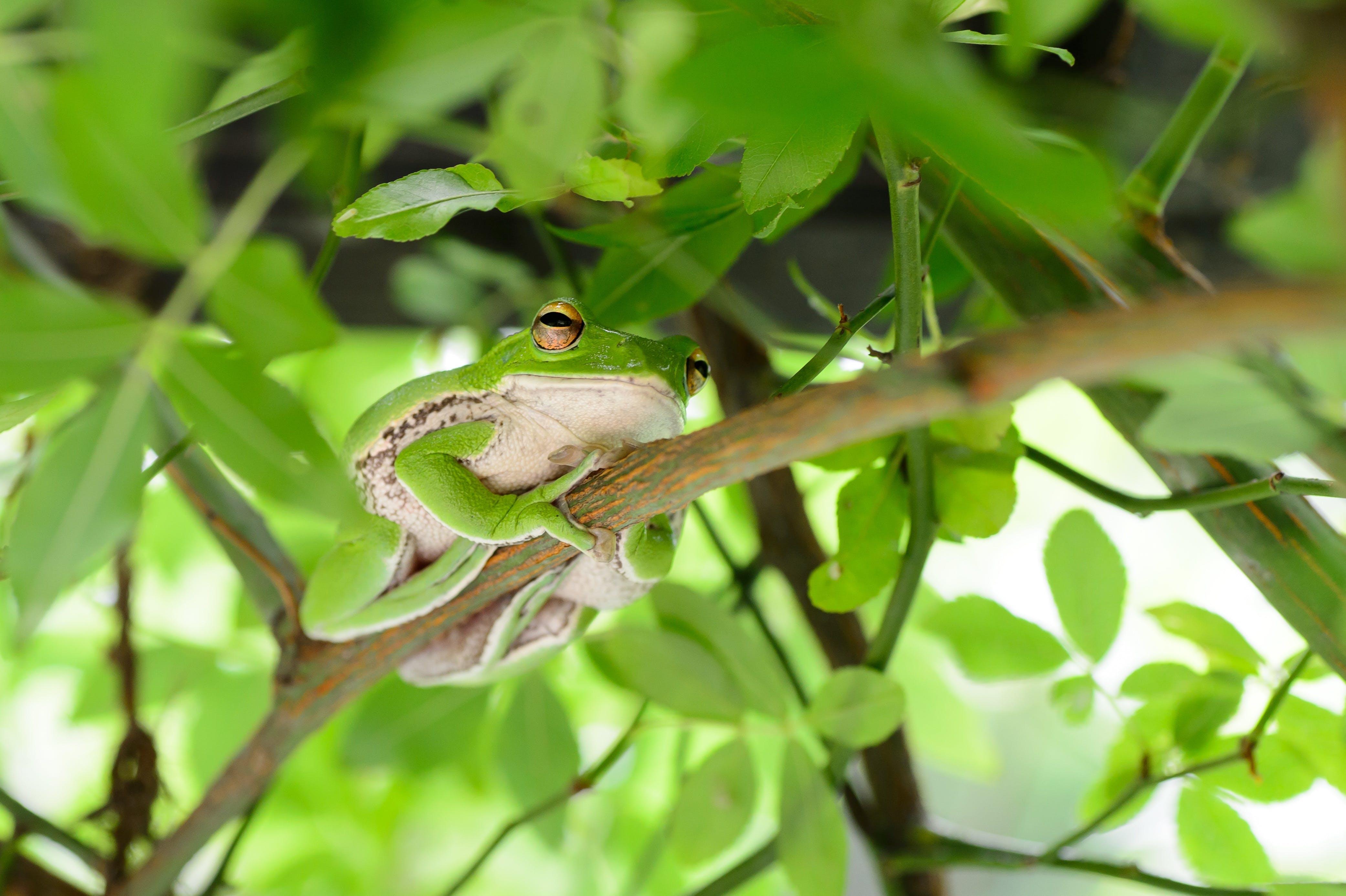 Tree Frog Selective Focal Photography