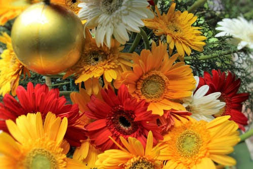 Free stock photo of beautiful flowers, christmas, christmas ball, christmas card