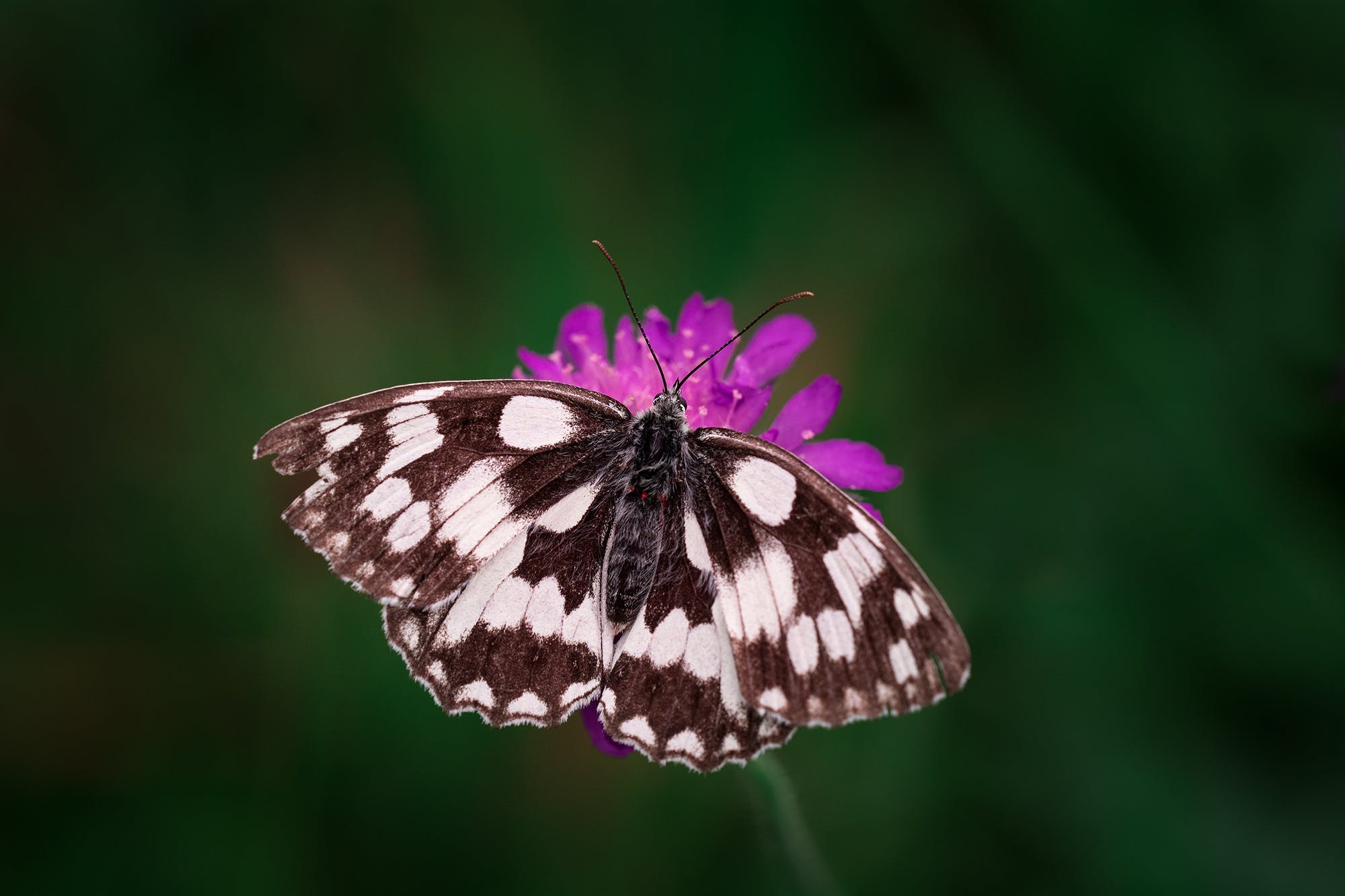 Tilt Shift Photography of Black and White Butterfly