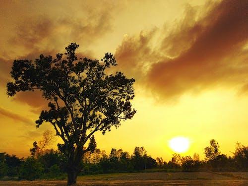 Gratis arkivbilde med atmosfærisk kveld, gyllen, kveldssol, mettet