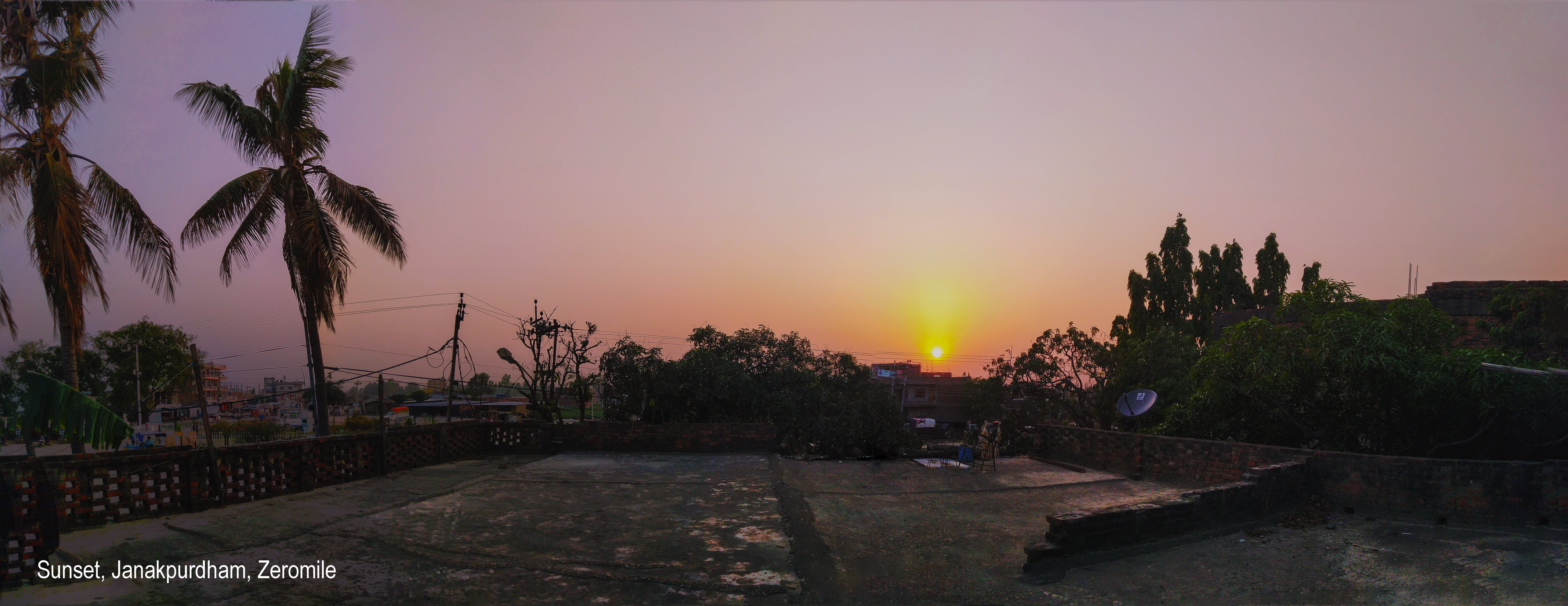 Free stock photo of coconut, evening, Evening plants, evening sky
