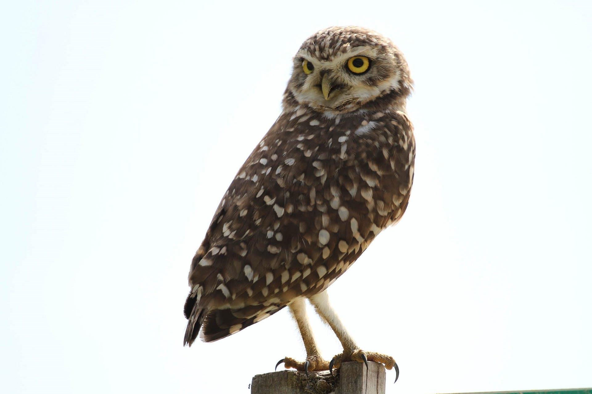 Free stock photo of nature, bird, eyes, looking