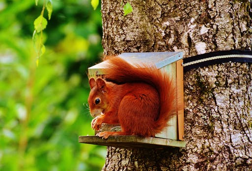 Brown Squirrel on Gray Wooden House on Tree