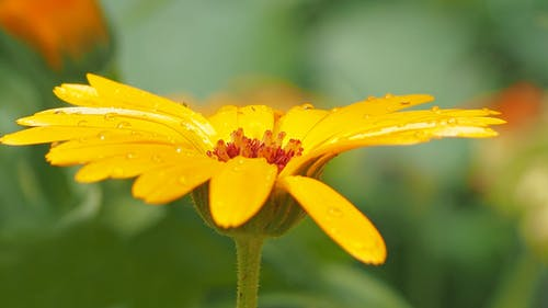 黄色の花びらの花の浅い写真
