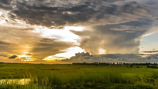 Macro Shot of Green Grass Field Under Cloudy Sky during Sunset