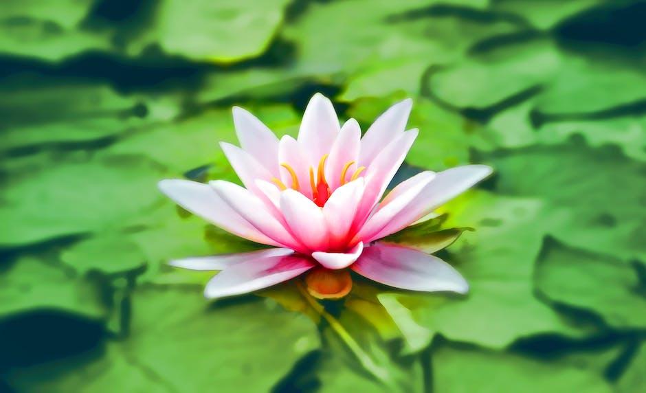 aquatic, bloom, blooming