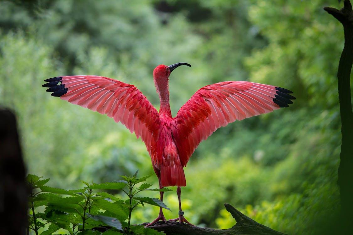 červená, colur, divočina