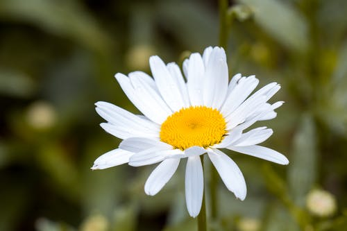 Ilmainen kuvapankkikuva tunnisteilla HD-taustakuva, kaste, kasvikunta, kukinta