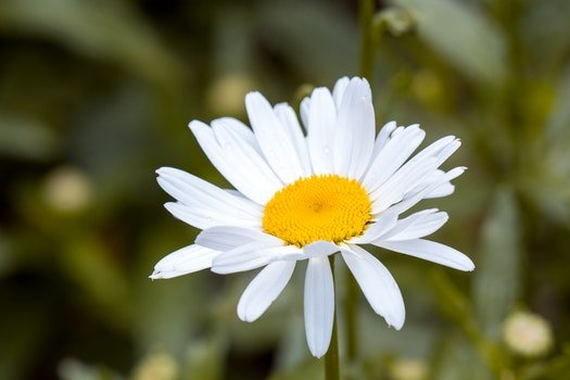 White and Yellow Flower in Macro Shot Photography