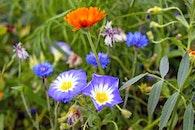 flowers, grass, petals
