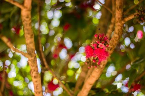 Gratis lagerfoto af blomst, grøn, kontrast, lys