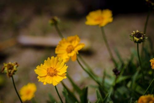 Gratis lagerfoto af blomst, grøn, gul, gul blomst