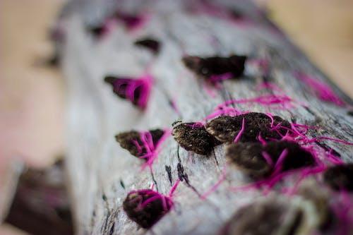 Gratis lagerfoto af ent, natur, skovsvamp, svamp